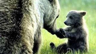O čem se zdá medvědům