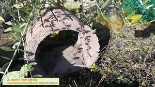 schildkröten gehege pflanzen