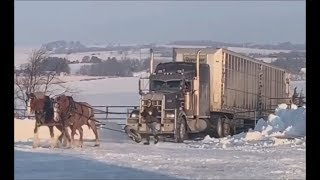 Two Horses Pulling Semi-truck From Icy Driveway