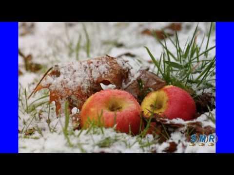 Новогодняя польская песня (яблоки на снегу)