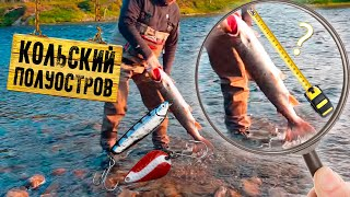 Рыбалка красной рыбы в мурманской области