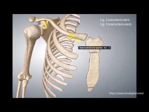 Lendenwirbel Osteochondrose Behandlungszeit