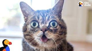 Cat's Unique Look Makes Her One In A Trillion - LIL BUB   The Dodo   Kholo.pk