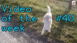 Video of the week 40 - Athletic Cat Fail