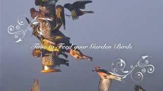 Please start feeding your garden birds - Now!