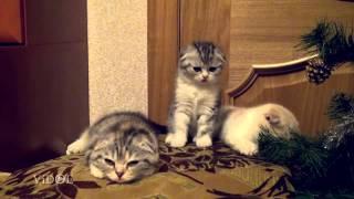 Смотреть онлайн Милейшие котятки зевают по очереди