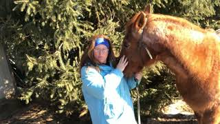 My Journey to Natural Horsemanship