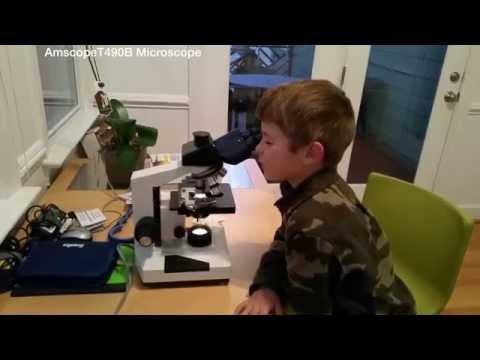 Inspector na lunas para sa mga worm