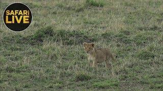 safariLIVE - Sunset Safari - October 19, 2018
