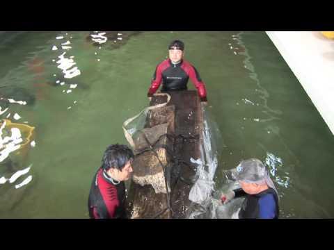 태안 마도1호선 수중발굴조사