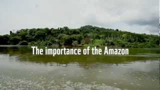 The importance of the Amazon to the world
