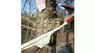 DEITA.RU В Амурской области в лесу развешены километры трусов