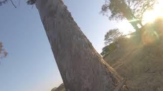 Freestyle nas árvores até cair - drone FPV