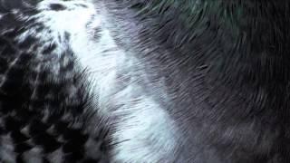 Jonas Villumsen - Mit venstre hjerte (audio)