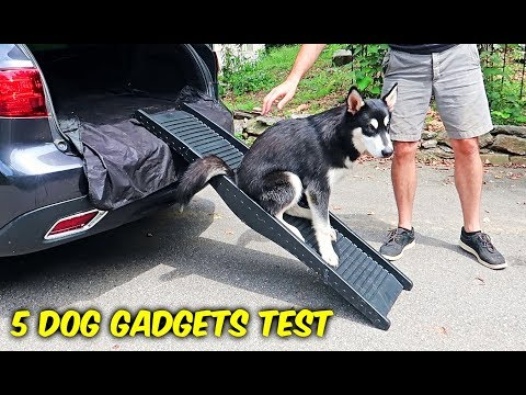 5 Dog Gadgets Put to the Test – Part 7