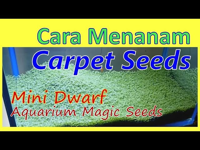 AQUASCAPE - Menanam Carpet Seeds/Magic Seeds Mini Dwarf (ENGLISH SUBTITLE)