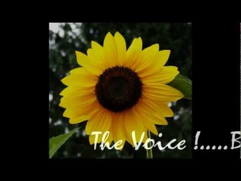 The Voice - By Josie Bernales