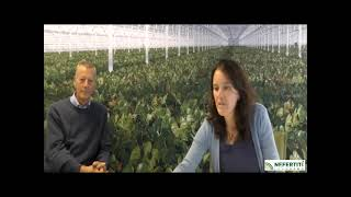 Webinar: emission reduction soil bound cultivation in Dutch greenhouses by a virtual lysimeter