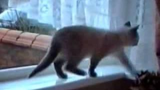 Самые смешные видео с животными.flv