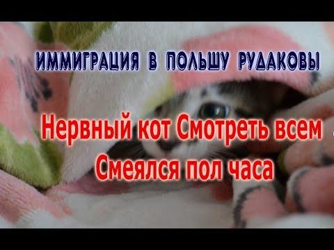 Нервный кот Смотреть всем Смеялся пол часа Жизнь в Польше