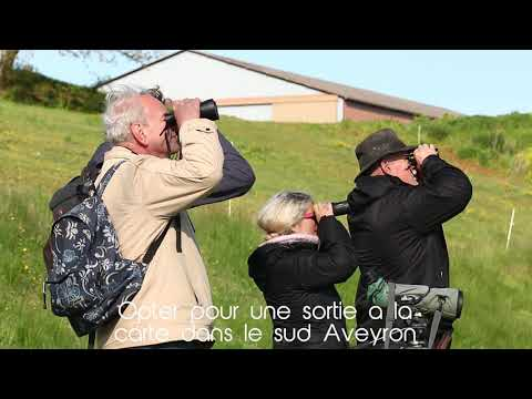 Sortie ornithologique, Hungry Bird Tours, Aveyron,