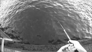 Pesca Rockfishing Pardo Bonito Listado