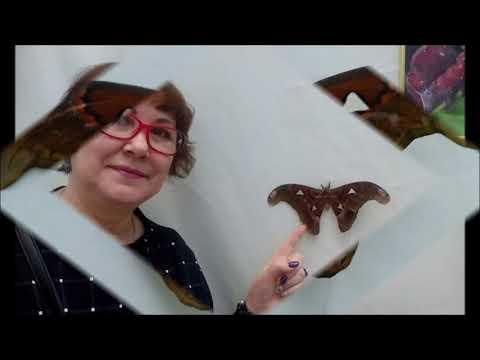 #РАЗВОД на деньги.  Выставка экзотических бабочек. А ГДЕ #БАБОЧКИ?