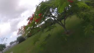 Flying with the Crew FPV Freestyle