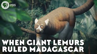 When Giant Lemurs Ruled Madagascar