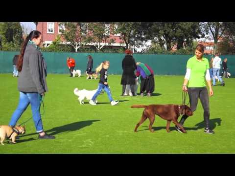 Hondengedragsdeskundige Anniek Winters geeft lezing bij HSVD in Dronten