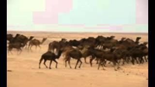 اغاني حصرية أشرف محفوظ. يا ذات الجدايل اغاني التراث الليبي تحميل MP3