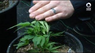 A favor y en contra - Legalización de la marihuana