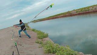 Клев на рыбалке в шымкенте