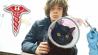 القط بتاعى حالته خطر !