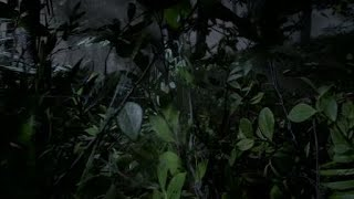 Red Dead Redemption 2 Online Horror - Forest Ambush and Chase