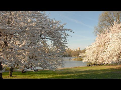 Central Park: Cherry Hill Tour
