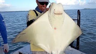 Monster Cownose Ray, Snook, Trout and More - ft. Outlaw, LakeForkGuy and Redneck Circus