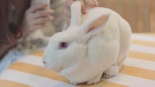 รีวิว คาเฟ่กระต่าย สำหรับคนรักกระต่ายห้ามพลาด