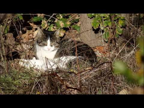 Les hérissons et les parasites