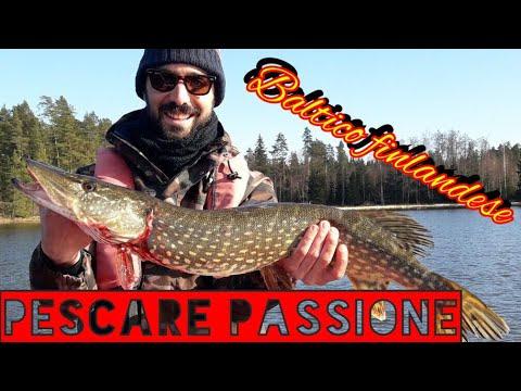 La pesca corretta su una carpa di video