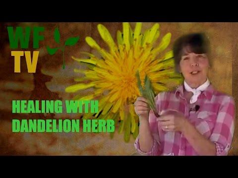Video Dandelion is a Healing Herb! Make a Dandelion Salve.