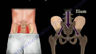 Sacroiliac Joint Dysfunction Animation - Everything You Need To Know - Dr. Nabil Ebraheim, M.D.