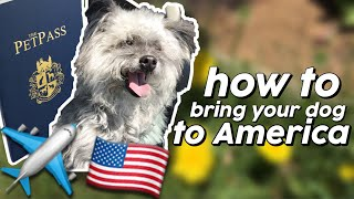HOW TO BRING YOUR DOG TO AMERICA? TRAVEL DOCUMENTS NEEDED