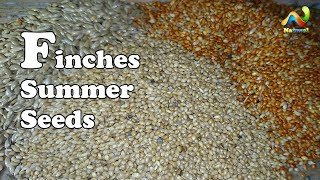 Finch Seed Mixes | Finch Food | Finches Summer Seeds