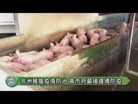 非洲豬瘟差門前一步 高市府嚴堵 陳其邁也籲市民朋友共同守護台灣豬