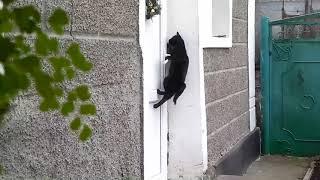 funny cats/прикол с котами. Супер умная и изобретательная кошка/ Super cat