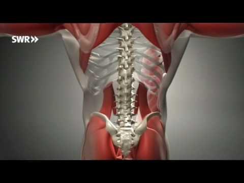Die Weise der Behandlung vom Rücken des Schmerzes