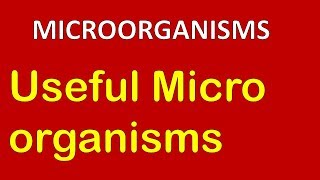 CH06-MICROBIOLOGY-PART08-ECONOMIC IMPORTANCE OF MICROBES