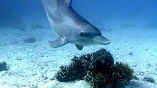 preview picture of video 'Tauchen -El Gouna / Ägypten- (u.a. Delfine u. Wrack Giannis D.)'