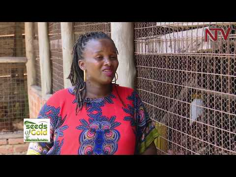 SEEDS OF GOLD: What farmers need to succeed in poultry farming